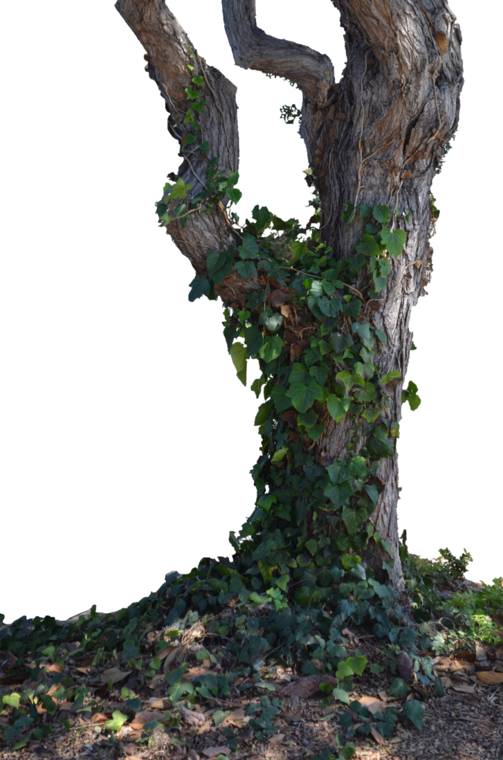 Tree trunk png. Image