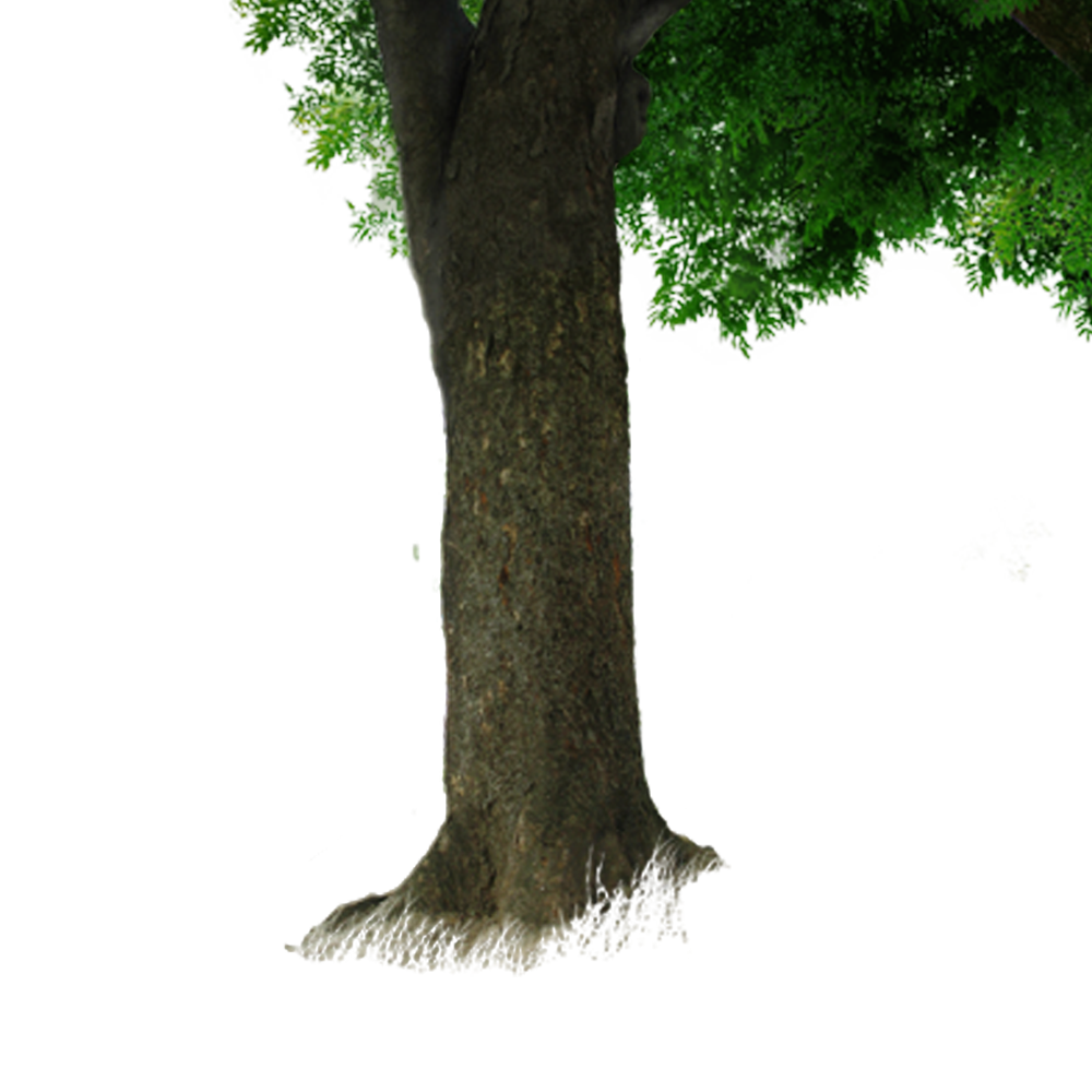 Tree trunk png. Branch free to pull