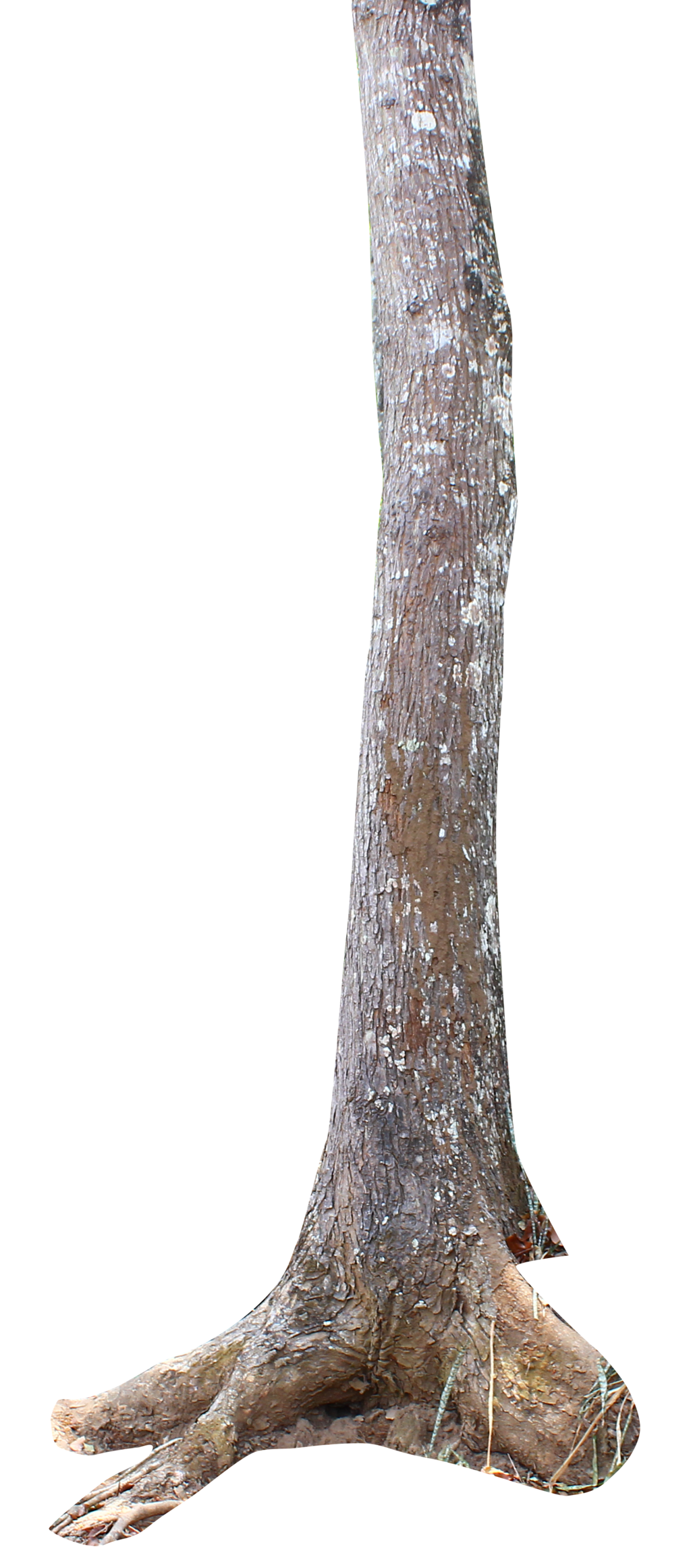 Tree trunk png. Transparent images pluspng by