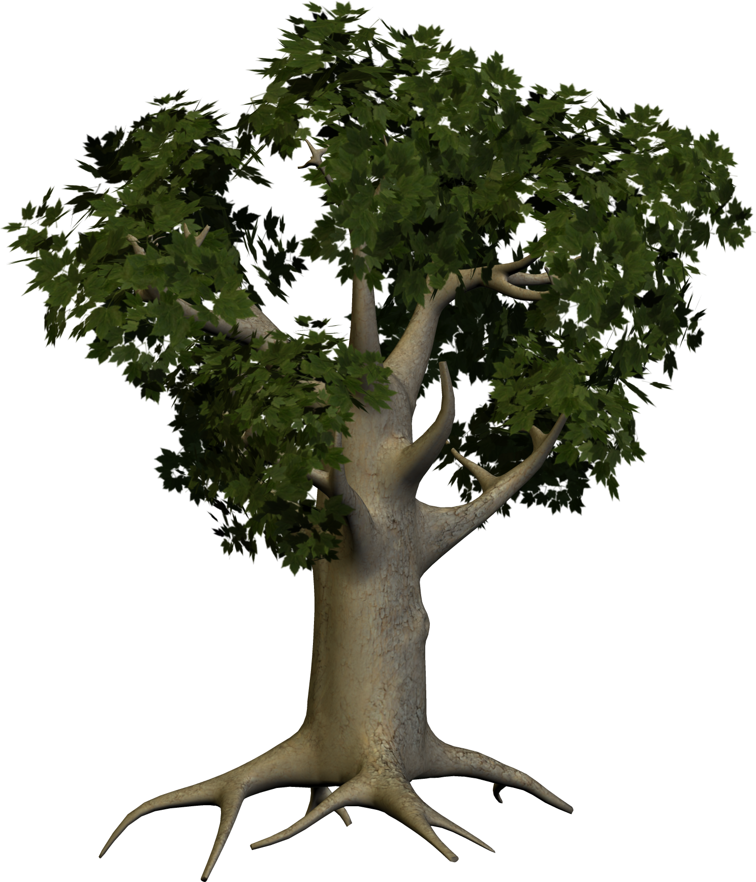 Big trees png. Tree image purepng free