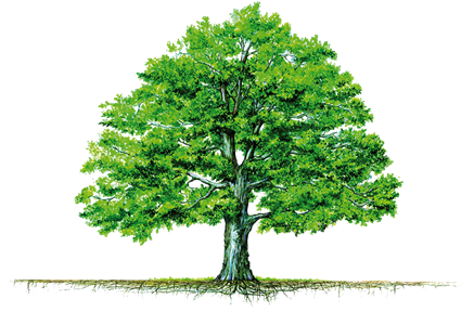 Tree with roots png. Question how should i