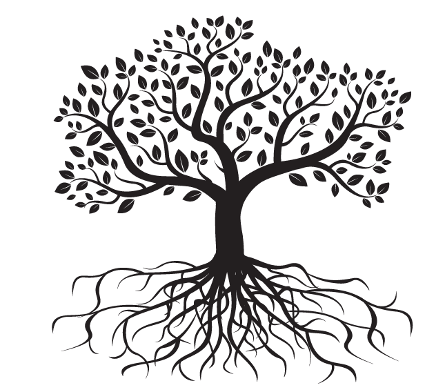 Tree with roots png. Root drawing photography transprent