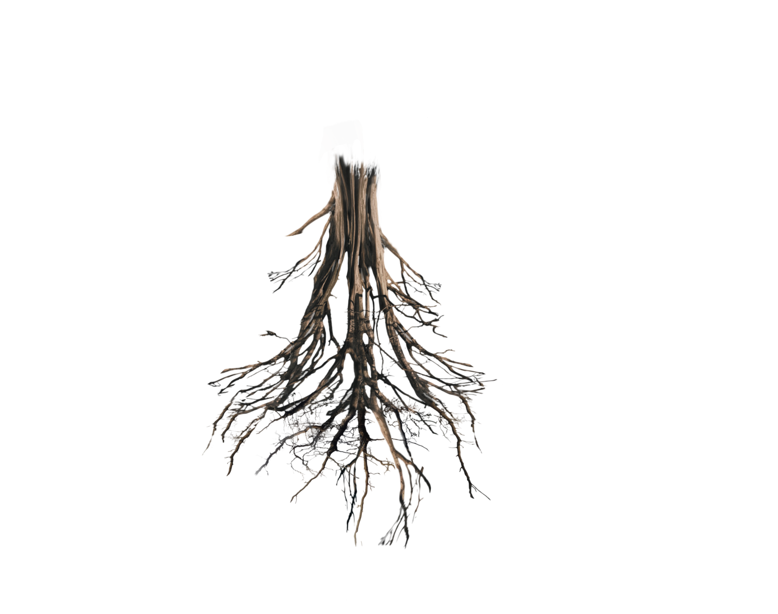 Tree with roots png. The good peaches pinterest