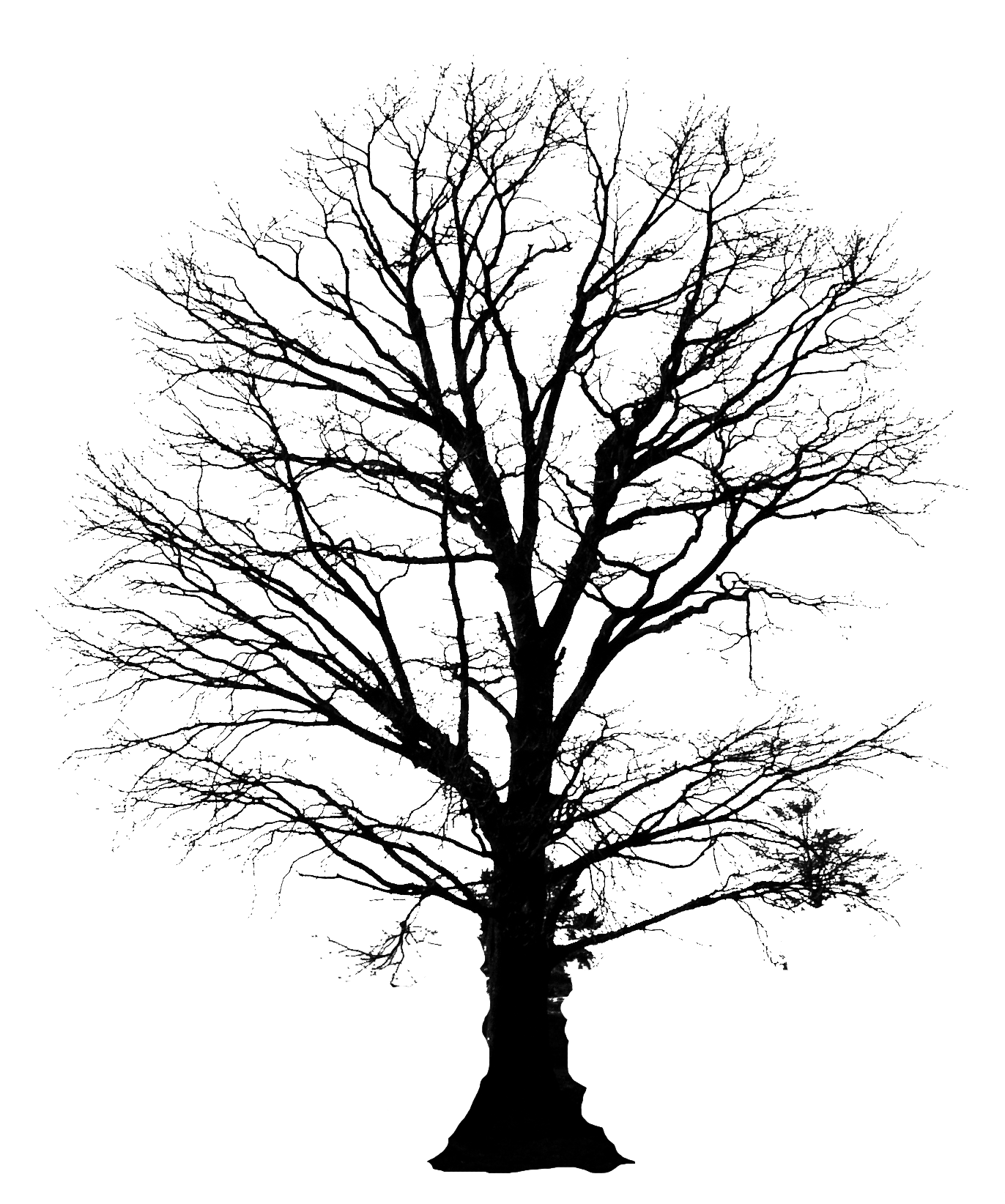 Tree with roots silhouette png. Google search so ya