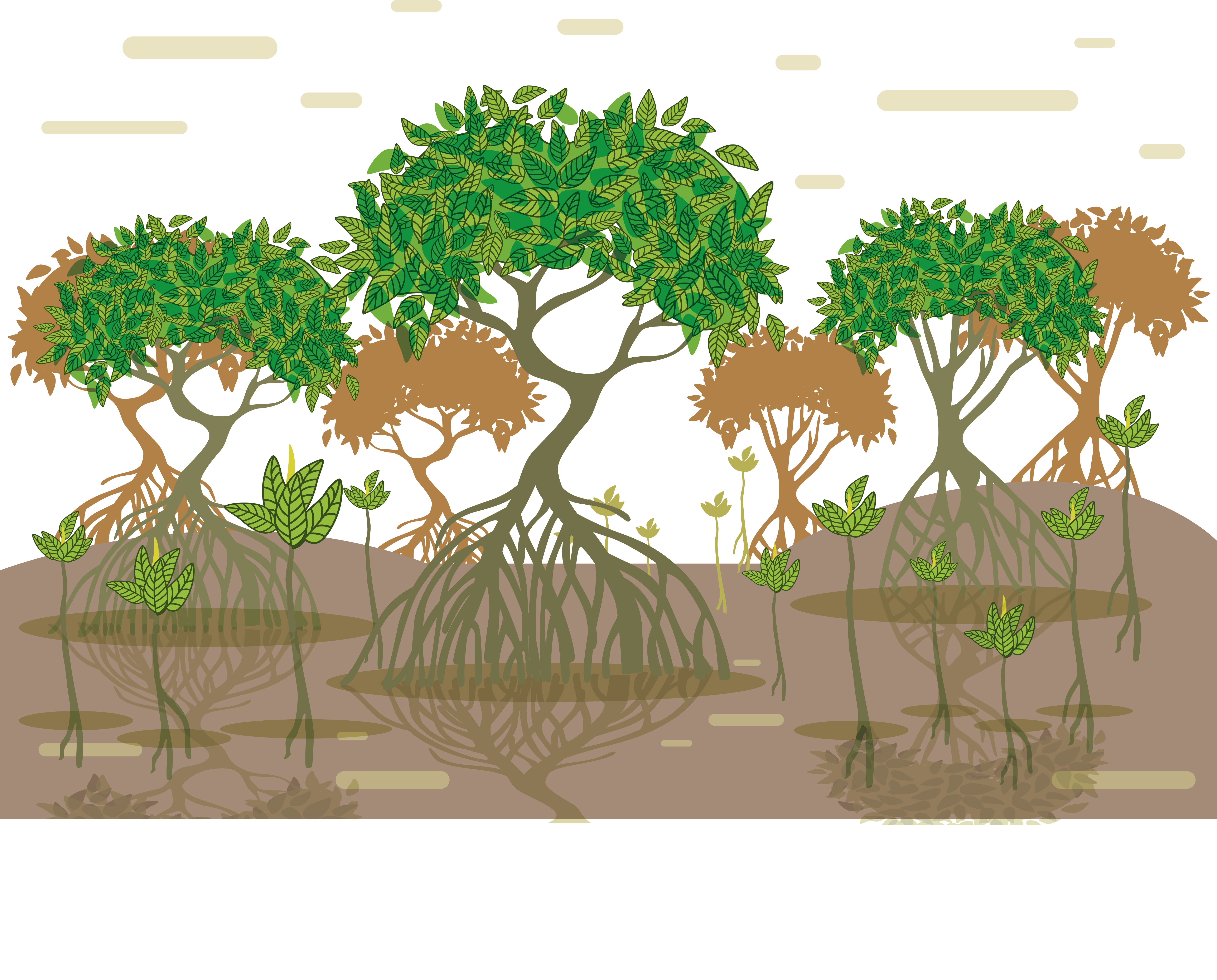 Tree with roots vector png. Tropical and subtropical moist