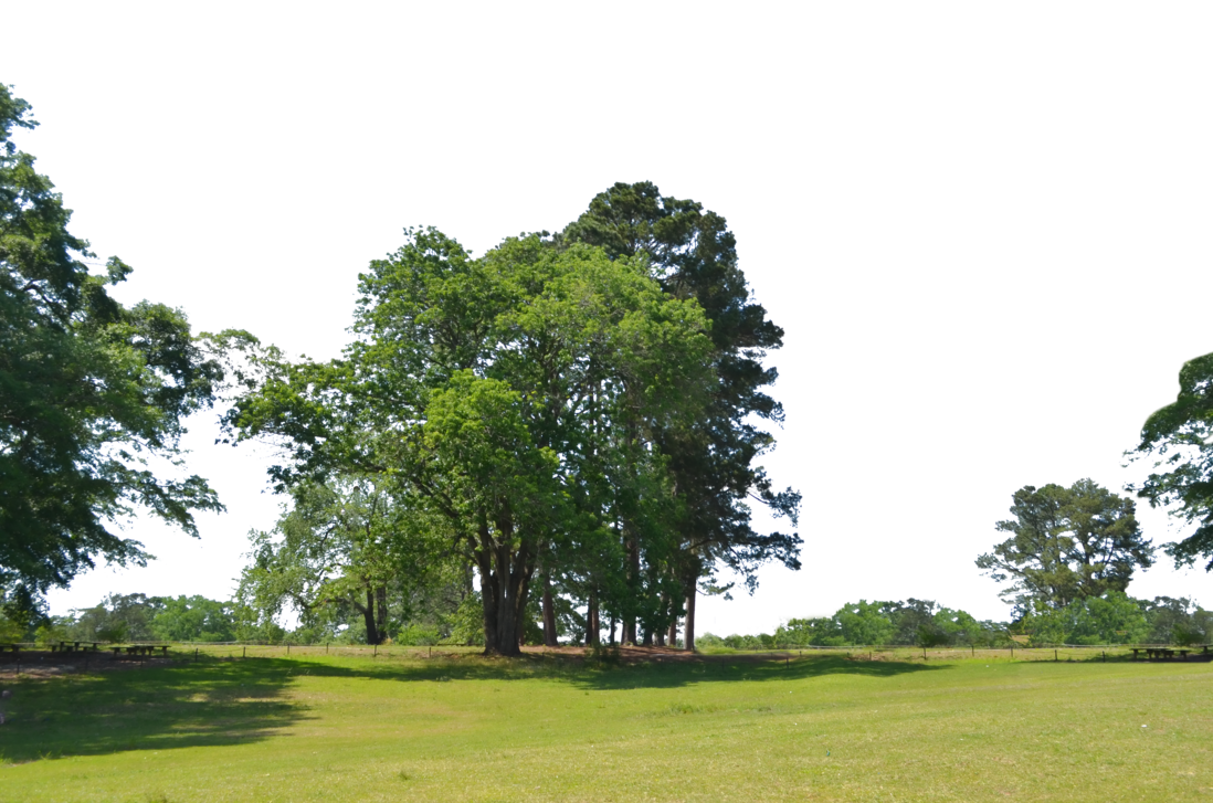Park trees png. At background stock photo