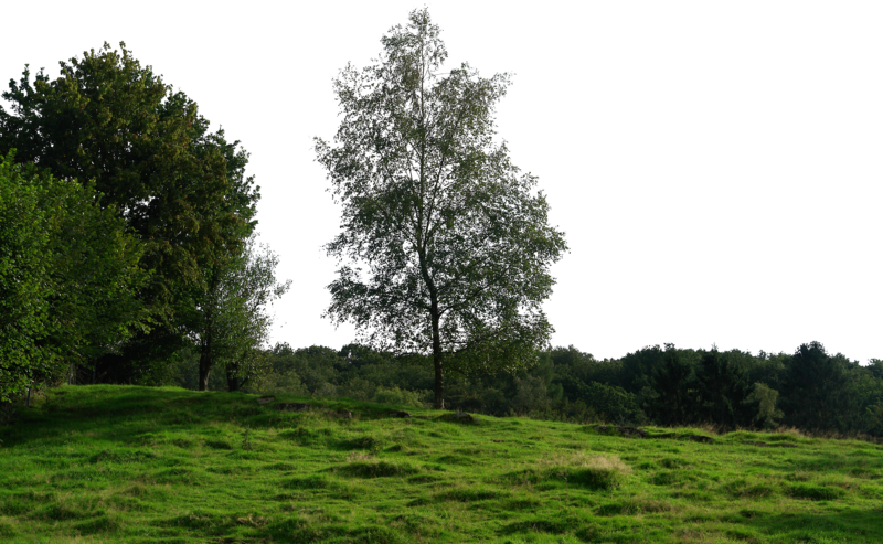 Background trees png. Image