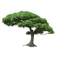 Background trees png. Download tree free photo