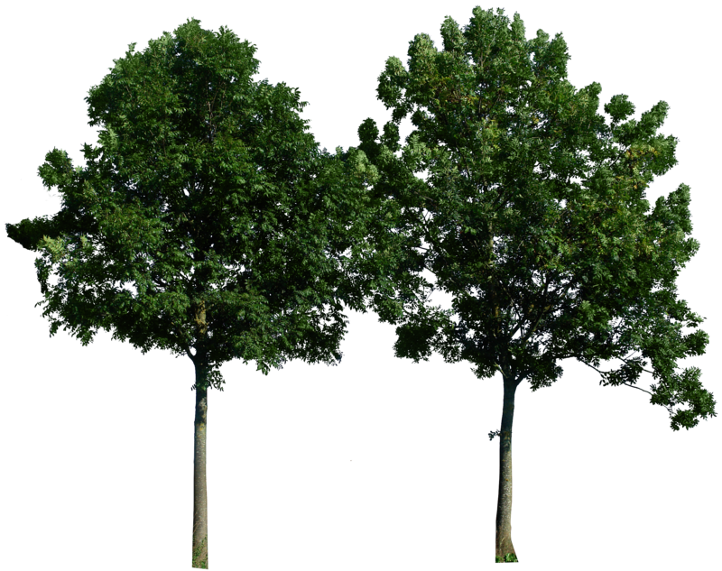 trees background png