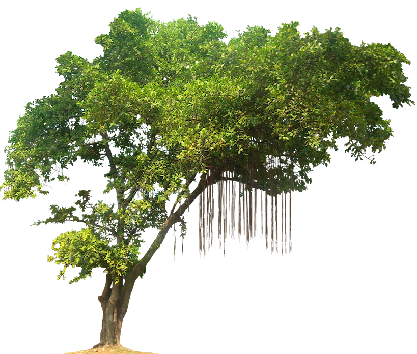 png of trees