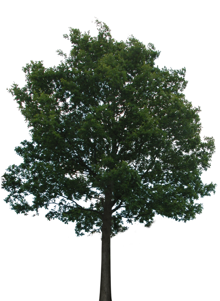 Trees background png. Tree with transparent no