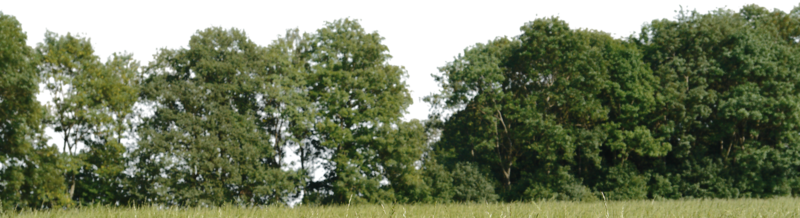 Tree for background by. Forest trees png picture library