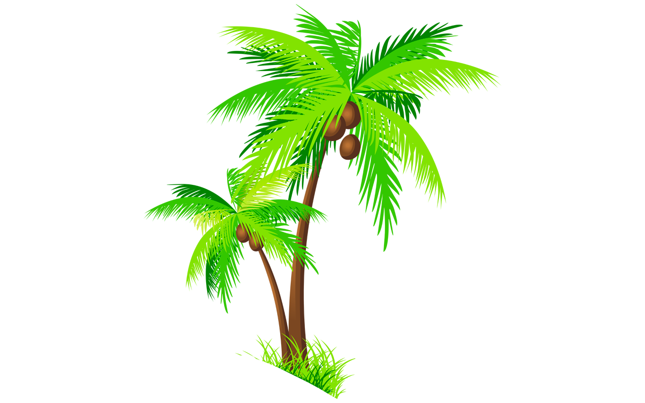 Trees clipart buko. Coconut tree pictures drawing