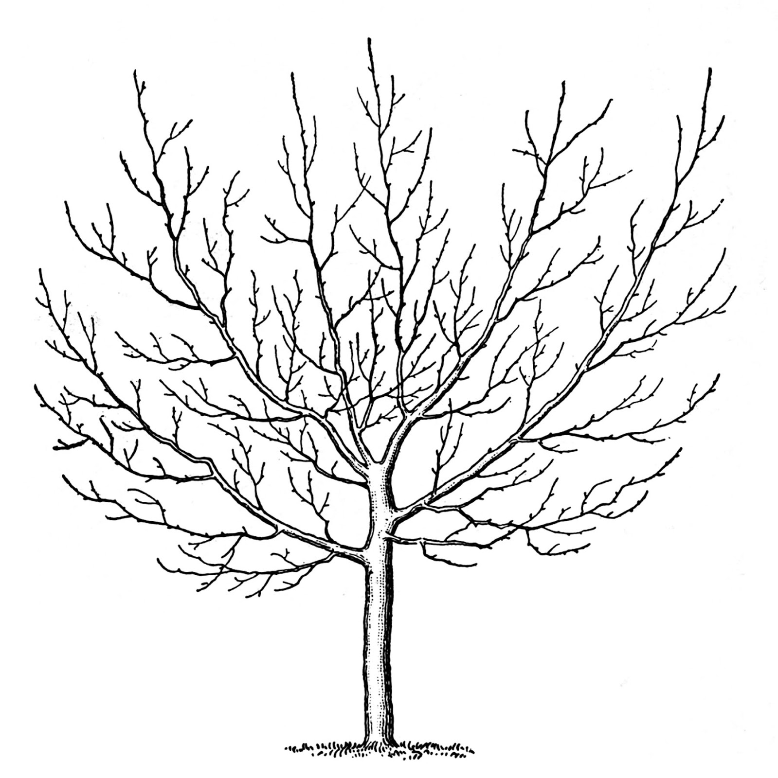 Trees clipart winter. Vintage clip art the