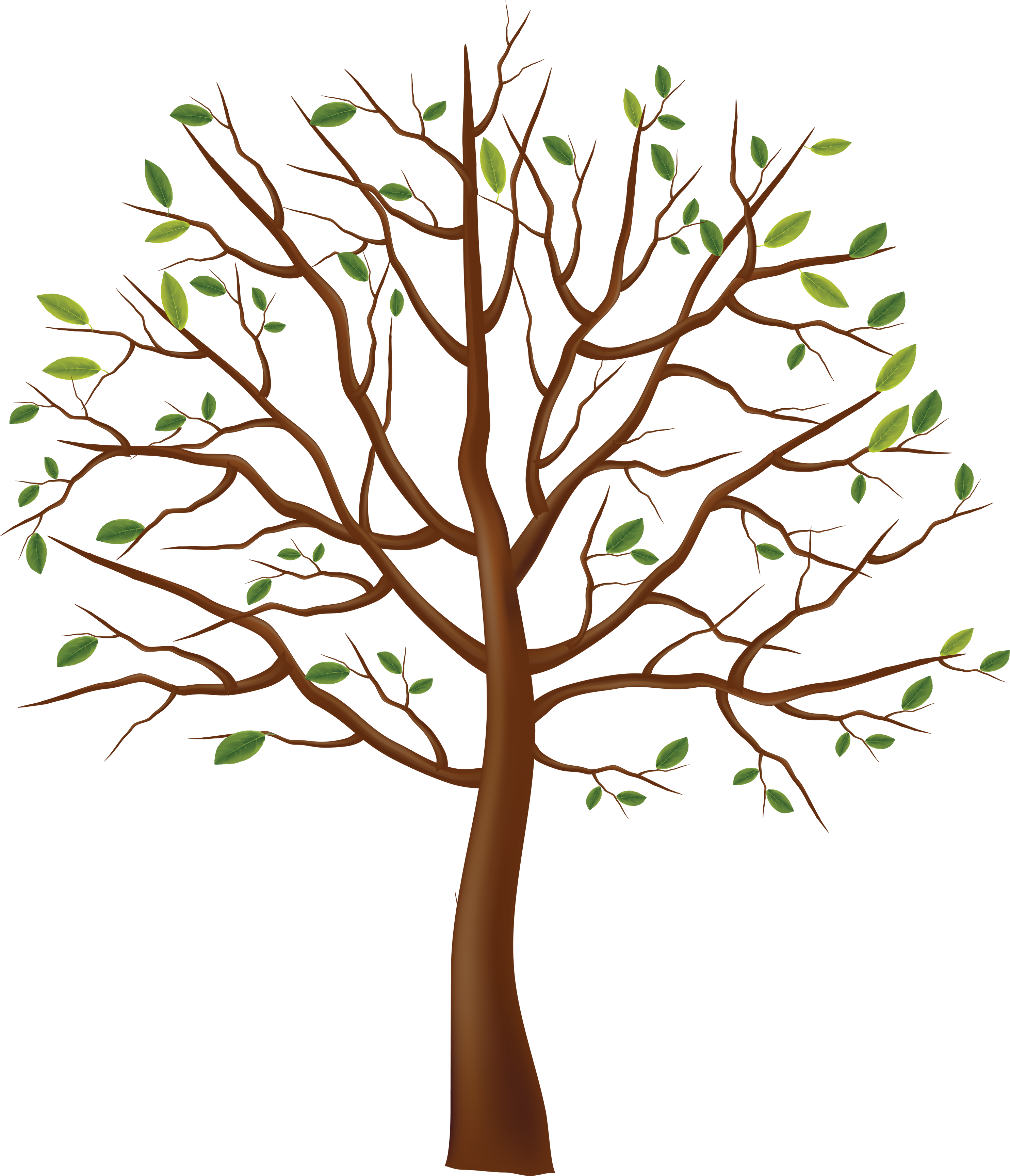Trees drawing png. Tree image id photo