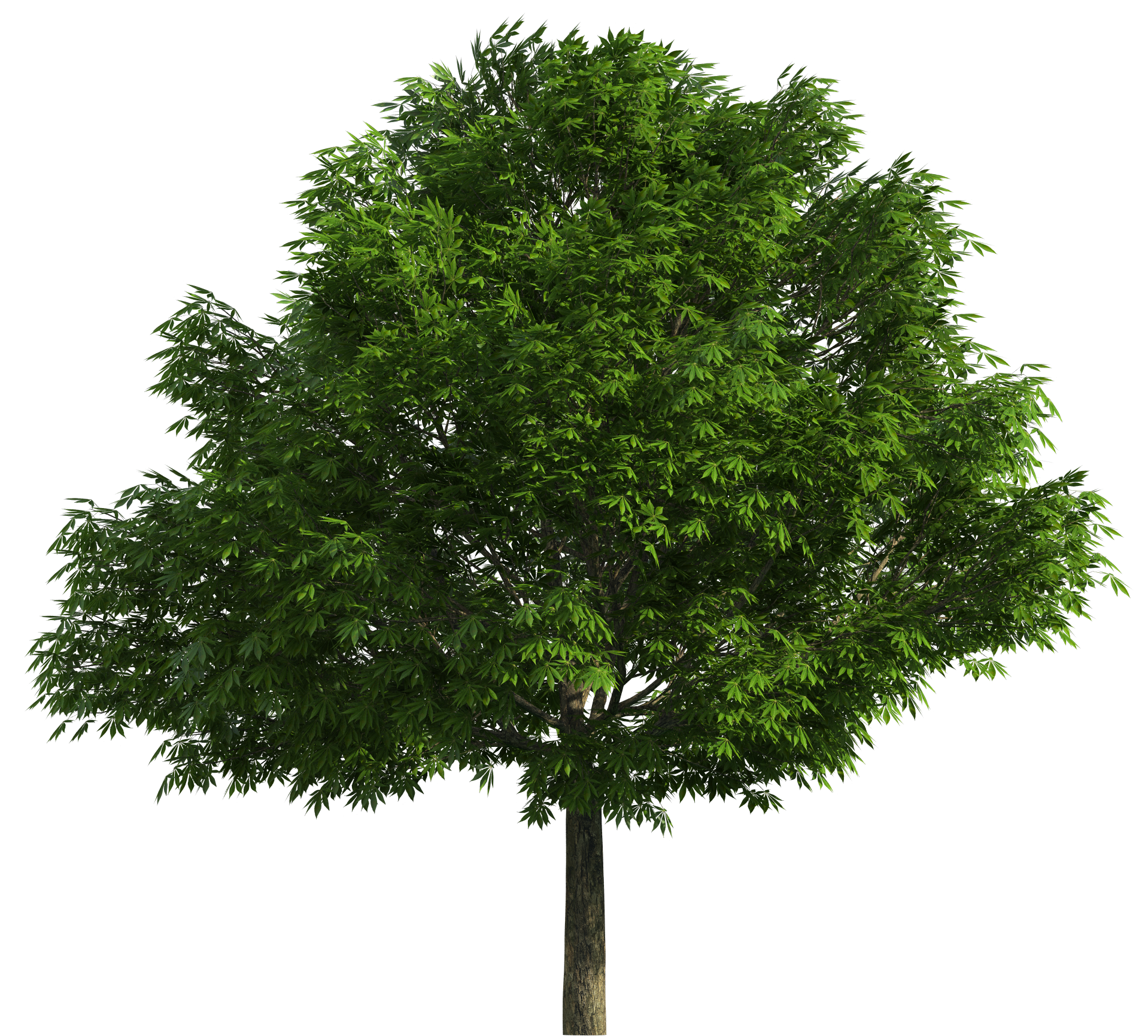 Trees in png format. Realistic tree clip art