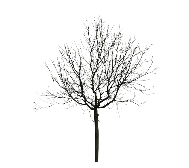 Trees png black and white. Inria wind projection basis