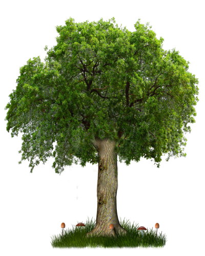 Trees png clipart. Download tree free transparent