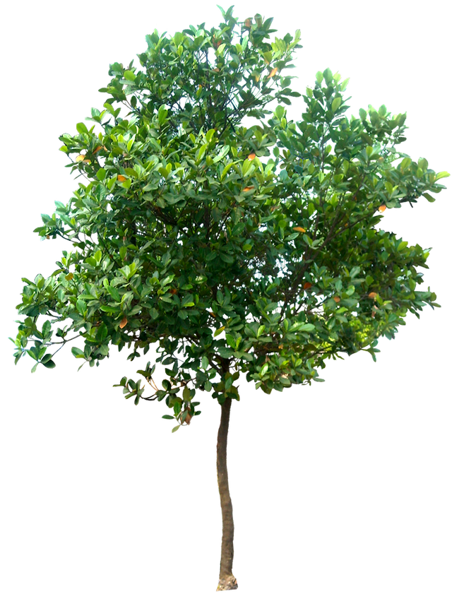 Photoshop trees png. Tree images free