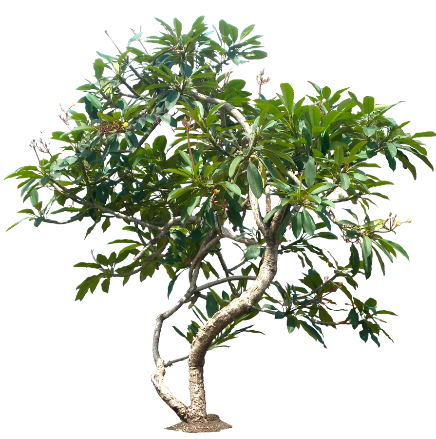 Trees png file. Tree images transparent free
