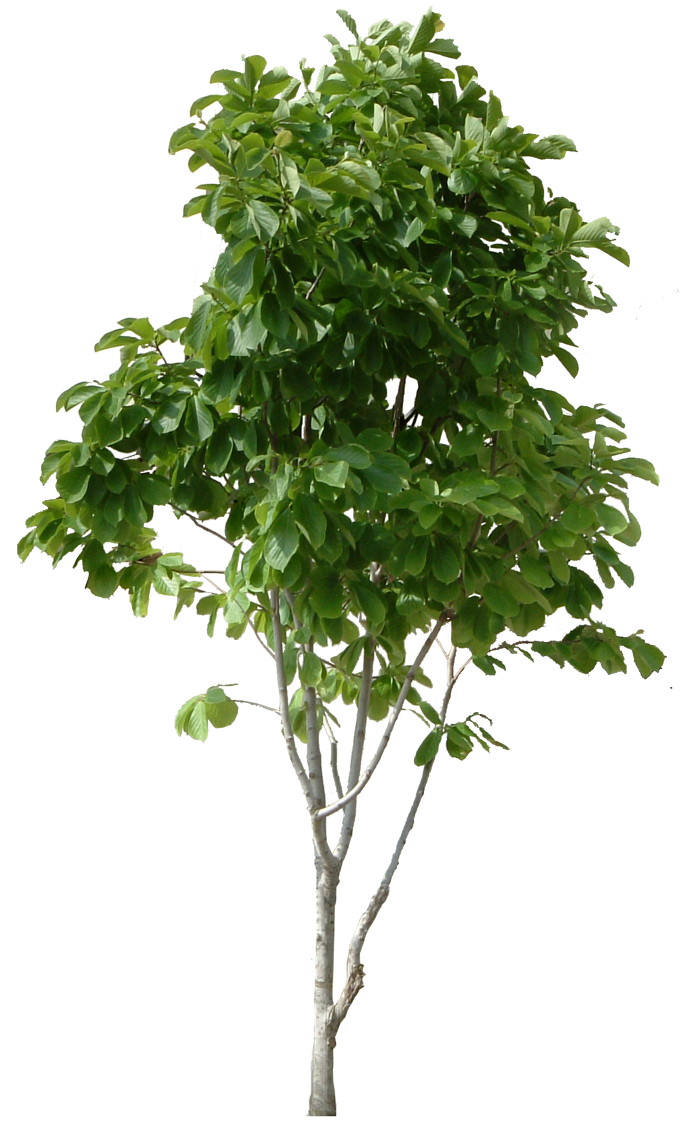 Hd tree cool b. Forest trees png clip freeuse download