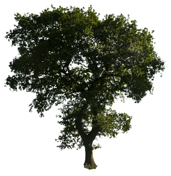 Trees png free download. Tree by gd on