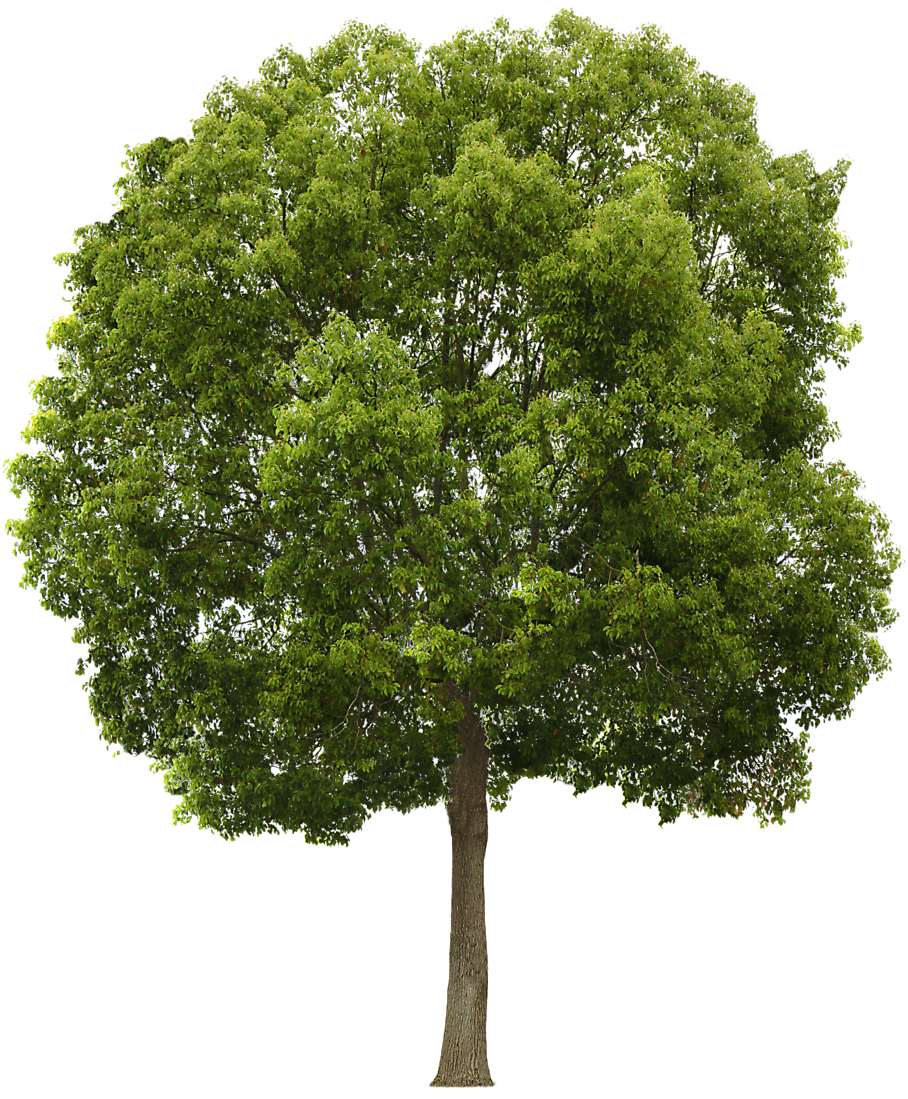 Trees png free download. Edge images tree icons