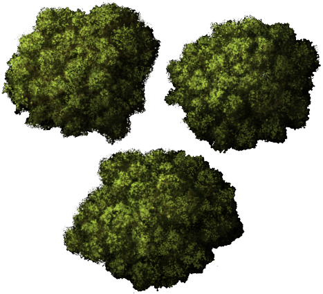Tree png top view. Transparent pictures free icons