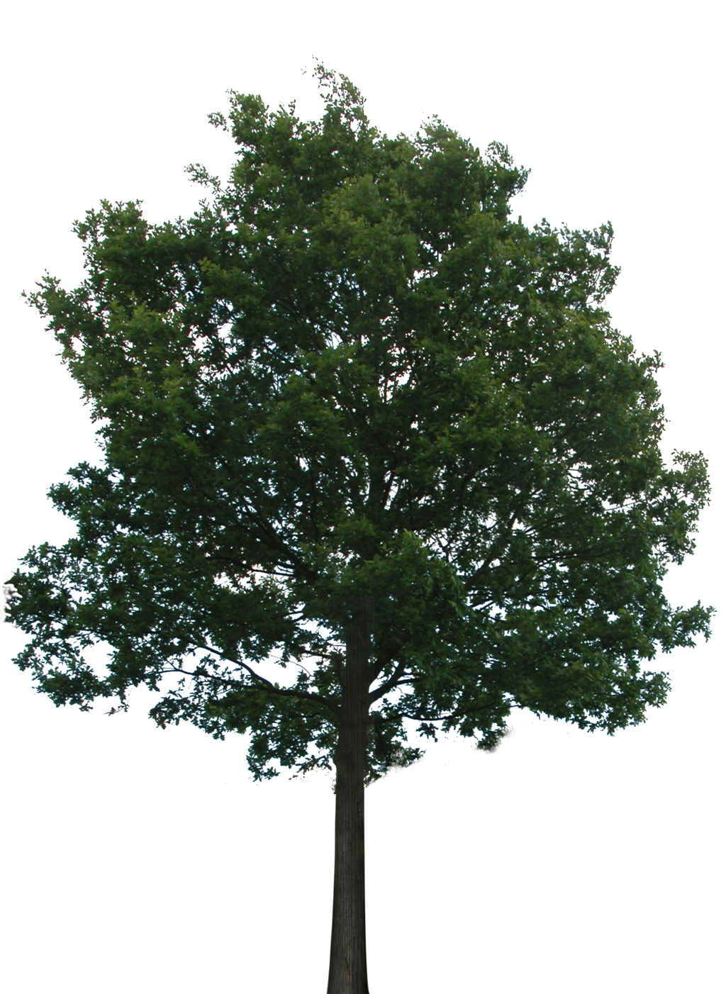 Trees transparent png. Hd tree background free