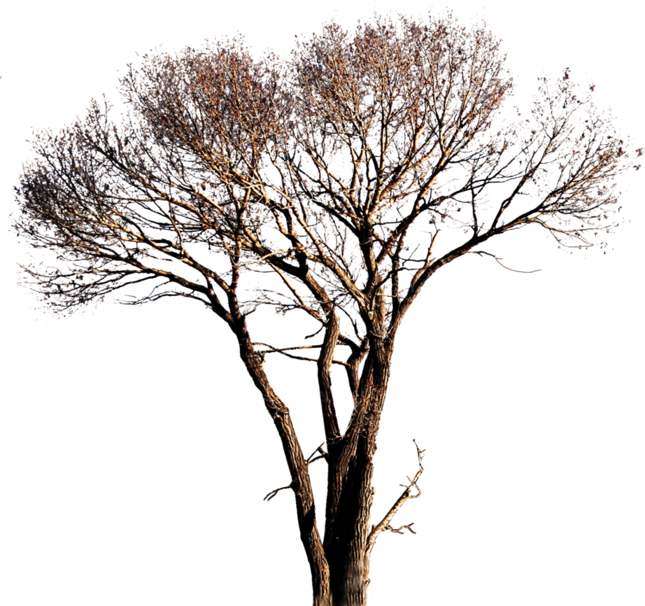 3 vector nature tree. Png free icons and