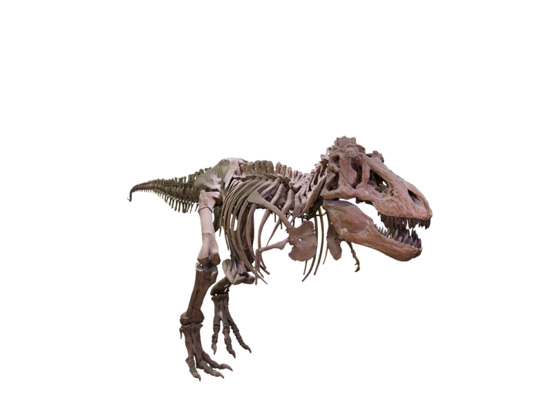 Trex png transparent background. Download free t rex