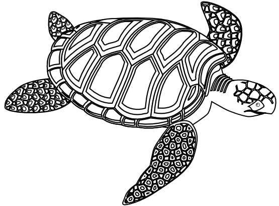 Turtle drawing png. Green sea black white