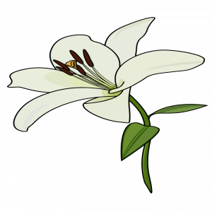 Trillium drawing flower. How to draw a