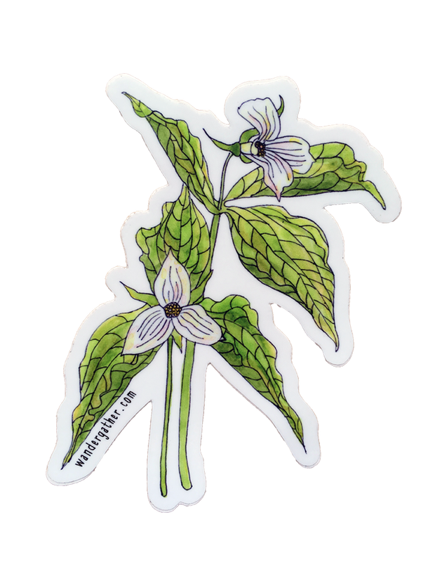 Trillium drawing cool. Wander and gather stickers