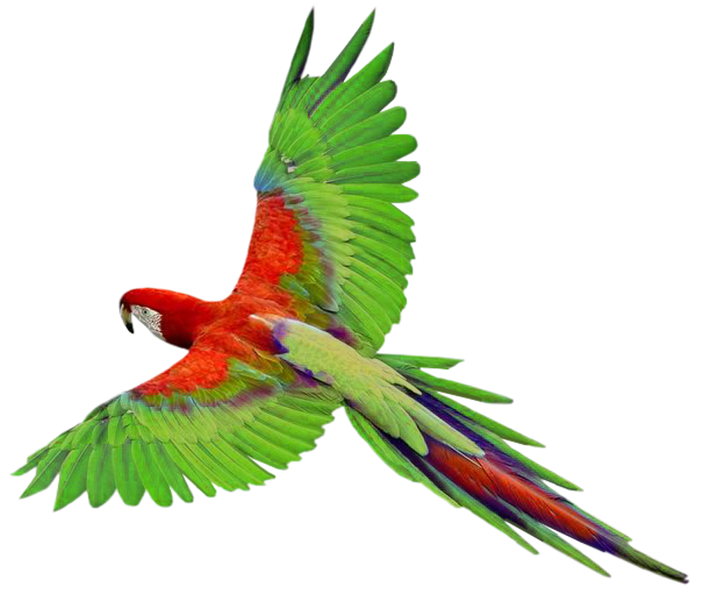 tropical birds png