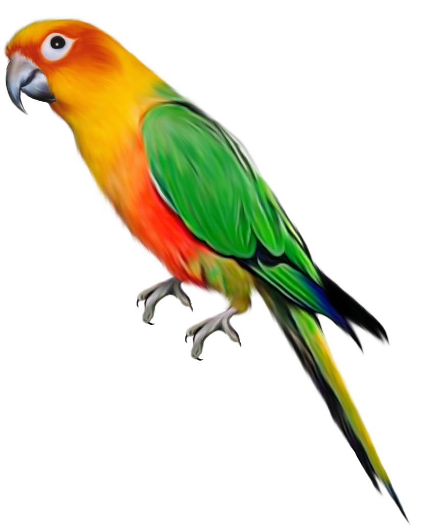 Tropical animals png. Parrot images free pictures