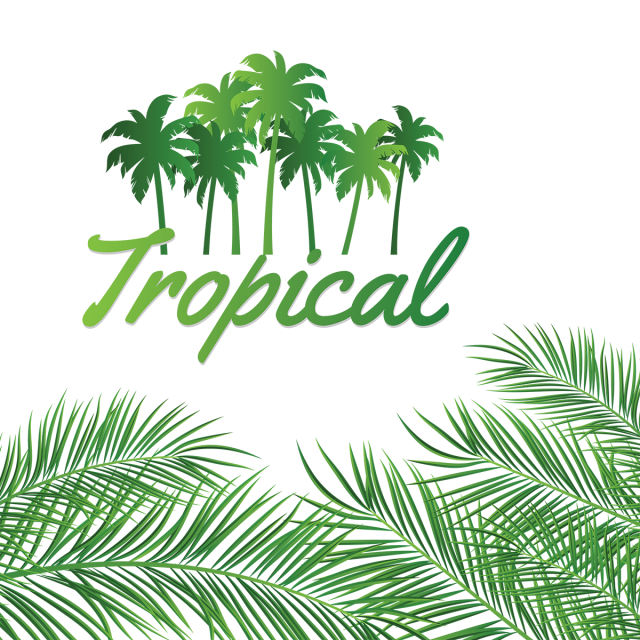 Hojas vector decoración. Leaves decoration with tropical