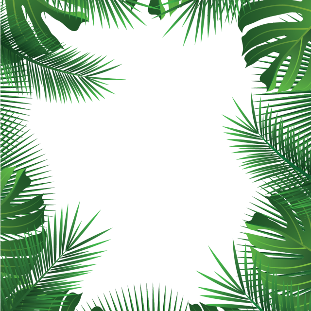 Palm tree frame png. Summer beach tropical leaves