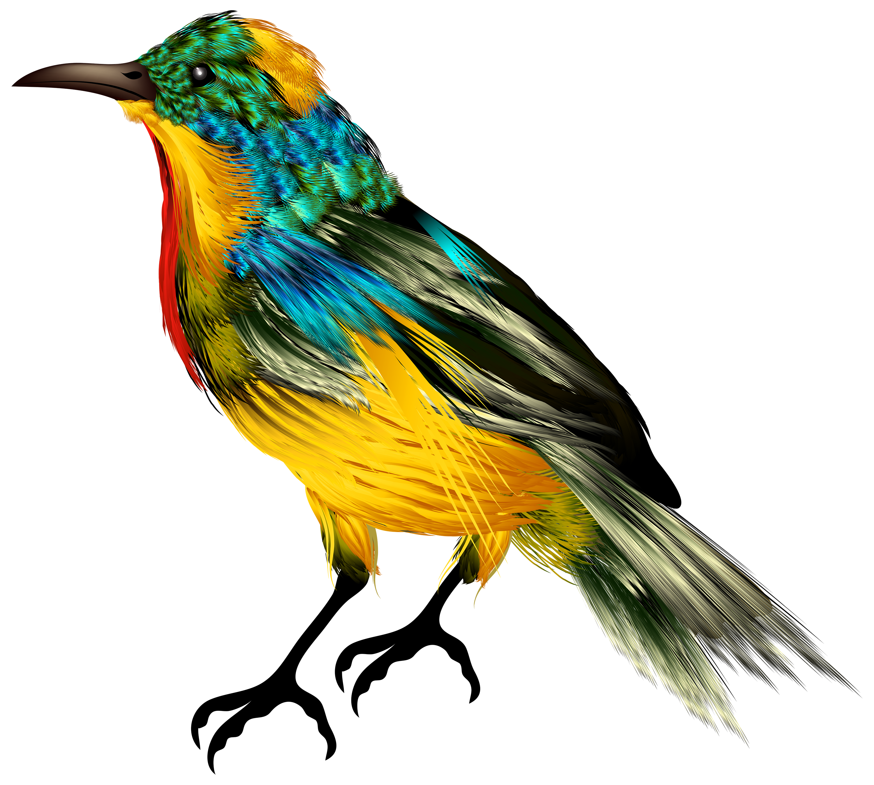 Birds png. Colourful bird clipart best vector freeuse stock