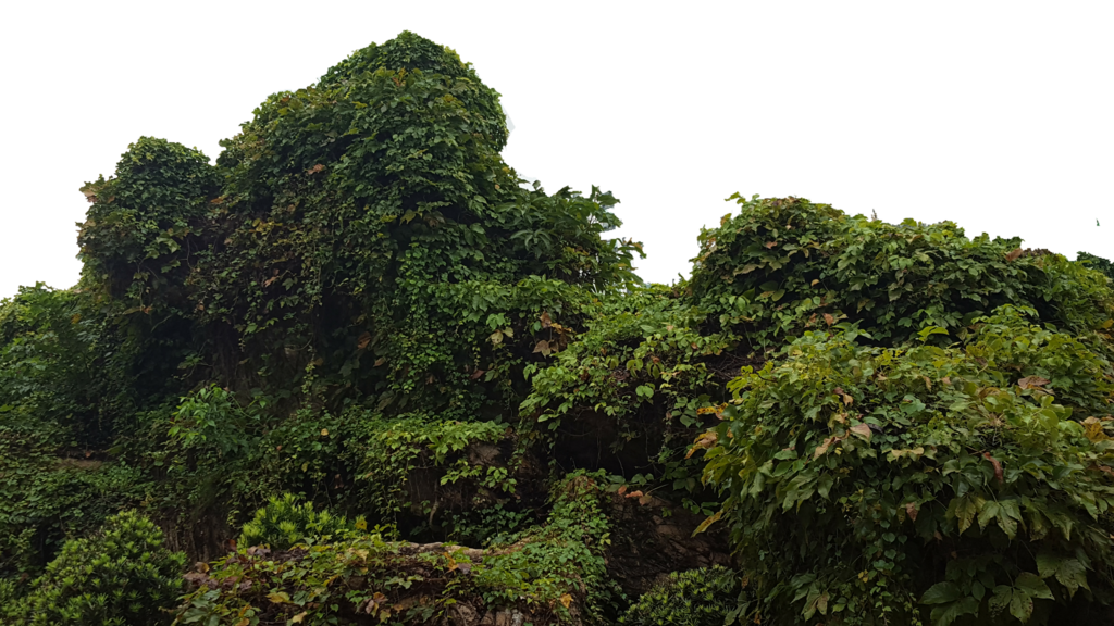 Tropical forest png. Bush by borobudur on