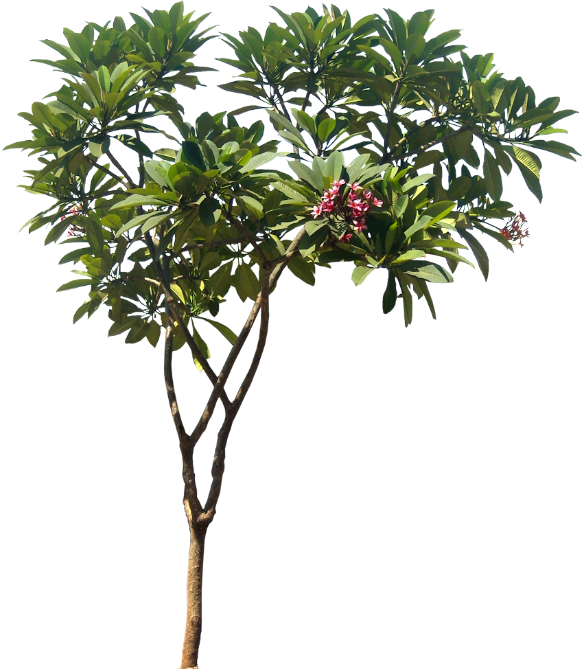 Tropical bush png. A collection of and
