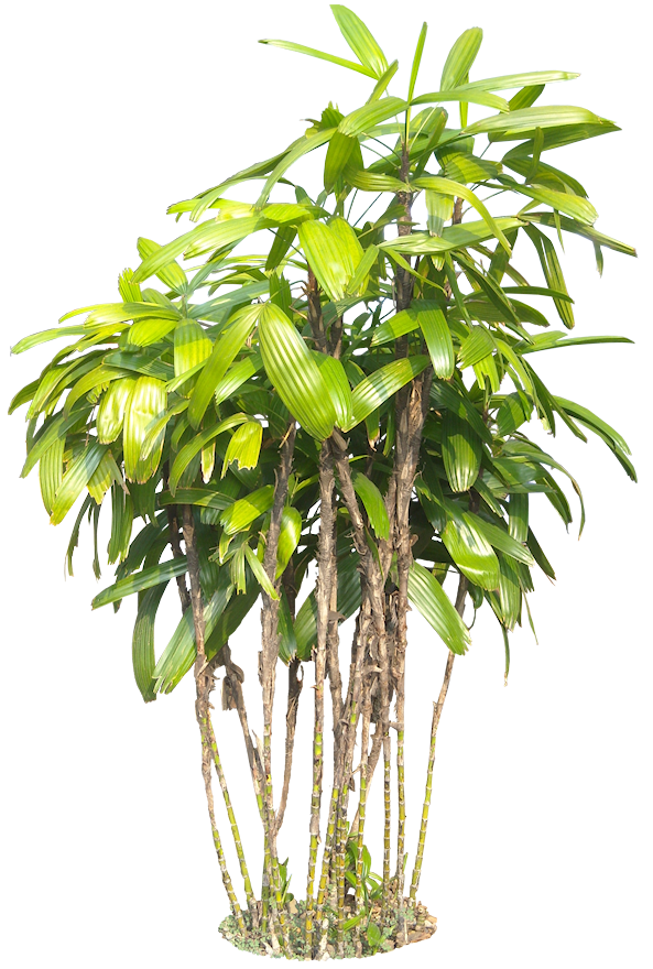 Tropical bushes png. A collection of and