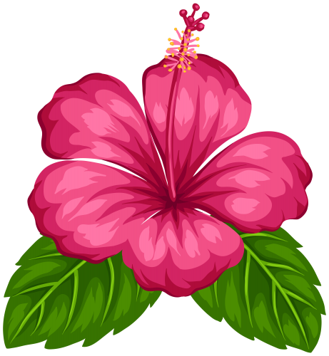 Hawaiian flowers png. Aloha tropical flower pinterest