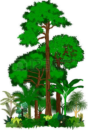 Tropical clipart tropical forest leaves. Rainforest clip art net