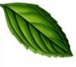 Tropical clipart tropical forest leaves. Rainforest clip art free