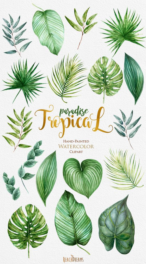 Tropical clipart tropical forest leaves. Tropic watercolor bright green