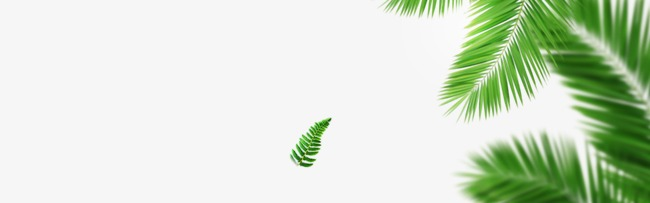 Tropical clipart tropical forest leaves. Forests leaf png image