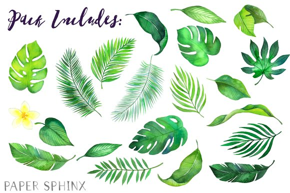 Tropical clipart tropical theme. Watercolor leaves illustrations creative