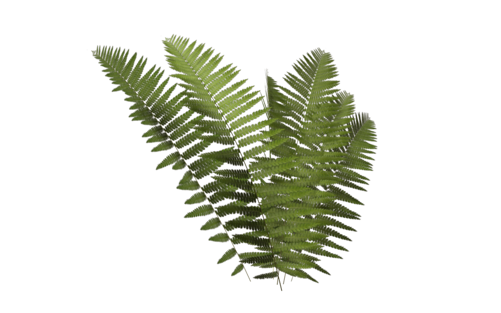 Ferns png pictures free. Transparent fern bush vector black and white