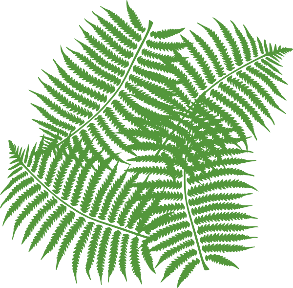 Tropical fern png. Four leaves clip art